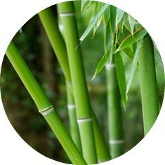 bamboo-1-jpg